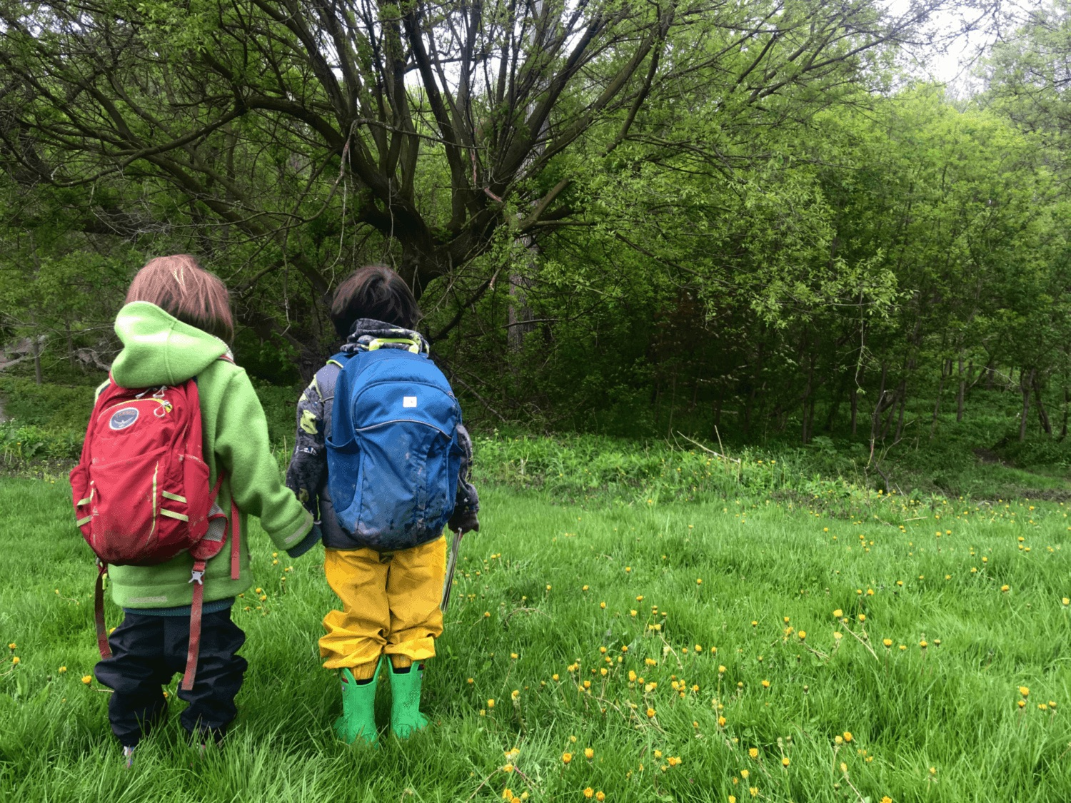 Learn more about our Outdoor School programs